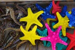 Estrellas y seahorses cogidos en Creta fotos de archivo libres de regalías
