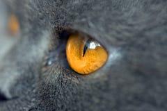 Estremamente primo piano dell'occhio di gatto Fotografia Stock