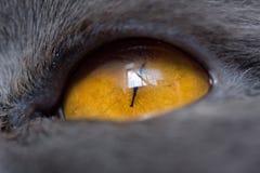 Estremamente primo piano dell'occhio di gatto Immagini Stock Libere da Diritti