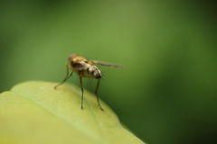 Estremità della mosca fotografia stock libera da diritti