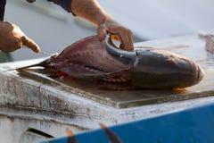 Estripação dos peixes fotografia de stock