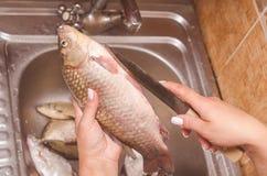 Estripação e limpeza dos peixes sobre o dissipador Foto de Stock Royalty Free