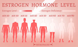 Estrogen Hormone Level. Beautiful medical vector illustration in pink colours. Scientific, educational and popular-scientific concept Royalty Free Stock Photography