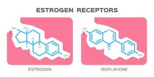 Estrogen and Phytoestrogens of isoflavone receptors. / white background Stock Images