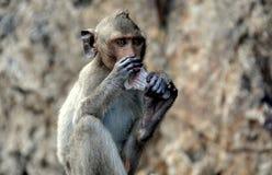 Estrondo Saen, Tailândia: Macaco assentado fotos de stock