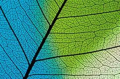 Estructura azulverde de la hoja Foto de archivo