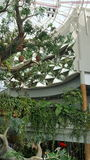 Estructura de árbol artificial, espejos, tucán Fotos de archivo