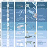 Estructura de la atmósfera de la Tierra, infographics con datos stock de ilustración