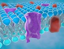 Estructura de la membrana de plasma Imágenes de archivo libres de regalías