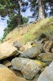 Estructura de la piedra y de las rocas debajo de árboles en bosque foto de archivo