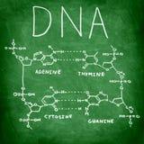 Estructura de la química de la DNA en la pizarra Imagenes de archivo
