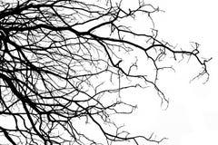 Estructura de la rama del árbol y del fondo blanco de madera de la muerte Imágenes de archivo libres de regalías