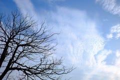 Estructura de la rama del árbol y del fondo blanco de madera de la muerte Foto de archivo libre de regalías