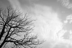 Estructura de la rama del árbol y de la madera de la muerte Imagen de archivo libre de regalías
