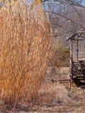 Estructura de madera abandonada y resistida en campo vegetado excesivo imagen de archivo libre de regalías