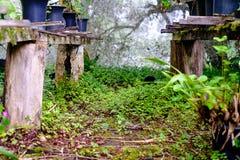 Estructura de madera con los diversos potes y floreros con las plantas verdes adentro Fotografía de archivo libre de regalías
