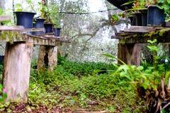 Estructura de madera con los diversos potes y floreros con las plantas verdes adentro Fotos de archivo