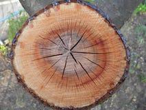 Estructura del árbol Imagen de archivo