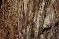 Estructura del árbol viejo Foto de archivo