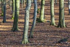 Estructura del bosque en invierno Fotos de archivo