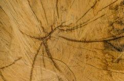estructura del tronco de árbol Imagen de archivo libre de regalías