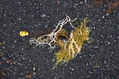 Estructura hermosa con la flora del mar Fotografía de archivo libre de regalías