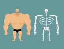 Estructura humana Hombres esqueléticos construcción del atleta Deshuesa Imágenes de archivo libres de regalías