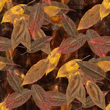 Estructura inconsútil: hojas de otoño Fotografía de archivo libre de regalías