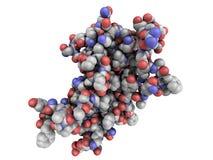 Estructura química de la hormona de crecimiento humano (hGH, Somatotropin) m Fotos de archivo libres de regalías