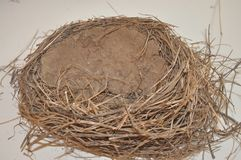 Estructura vacía de la jerarquía del ` s del pájaro usando fango e hierba foto de archivo libre de regalías