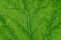 Estructura verde de la hoja Fotos de archivo libres de regalías