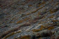 Estructura y hierba de la roca Fotos de archivo libres de regalías