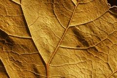 Estructura y venas de célula de la hoja del otoño Foto de archivo
