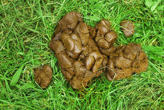 Estrume do cavalo Foto de Stock Royalty Free