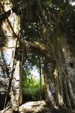 Estrutura abandonada Overgrown. fotos de stock