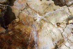 Estrutura bonita da madeira hirto de medo aqueles milhões de anos velhos imagens de stock royalty free
