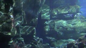 Estrutura concreta subaquática video estoque