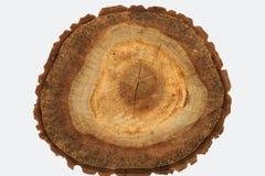A estrutura da árvore Fotos de Stock Royalty Free