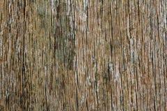 Estrutura da árvore sem casca Fotografia de Stock Royalty Free