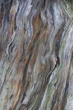 A estrutura da haste spruce velha Foto de Stock Royalty Free
