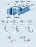 Estrutura da membrana Imagem de Stock