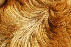 Estrutura da pele Foto de Stock