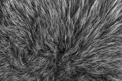 Estrutura da pele Fotos de Stock