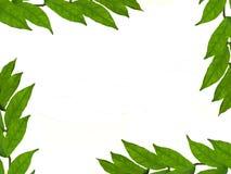 Estrutura das folhas Imagens de Stock Royalty Free