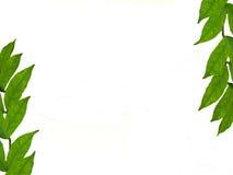 Estrutura das folhas Fotografia de Stock
