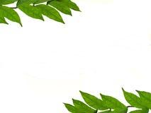 Estrutura das folhas Fotos de Stock