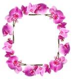 Estrutura das orquídeas das flores fotografia de stock royalty free