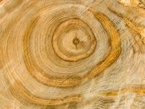 Estrutura de árvore Foto de Stock Royalty Free