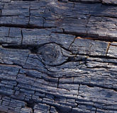 Estrutura de madeira, árvore velha Fotografia de Stock Royalty Free