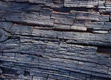 Estrutura de madeira, árvore velha Foto de Stock Royalty Free